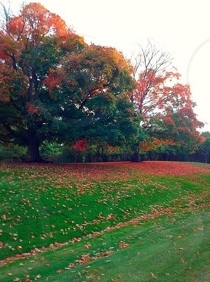 Fall!! photo