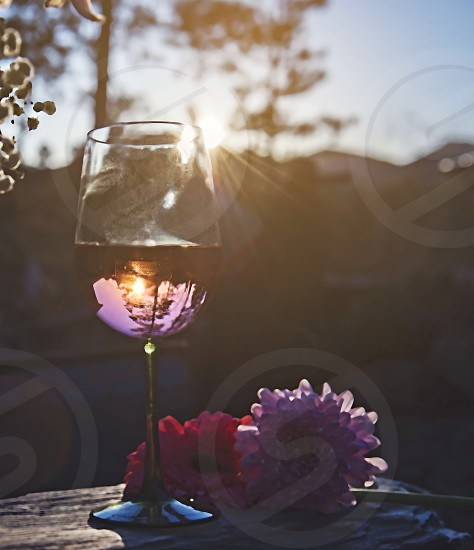 Rose wine rustic outdoors Black Hills flowers floral beauty vivid summer spring pink warm photo