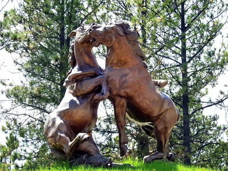 Fighting Stallions Custer SD photo