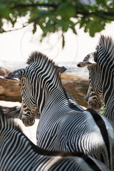 The Wilhelma zoo in Stuttgart Germany photo