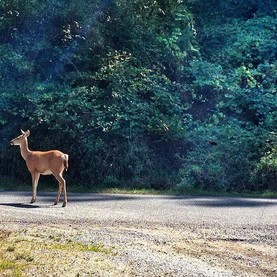 brown deer on road way photo