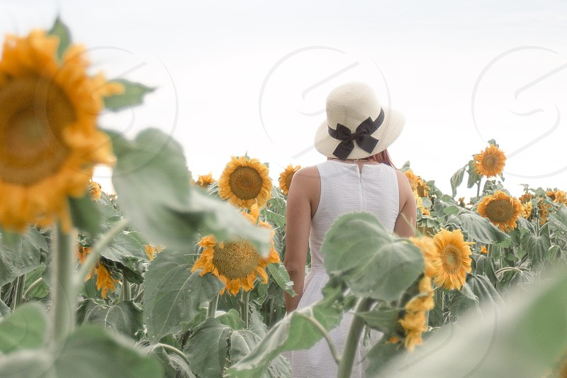 Playing in a sunflower field  photo
