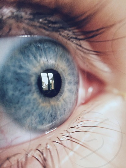 human eye blue iris photo