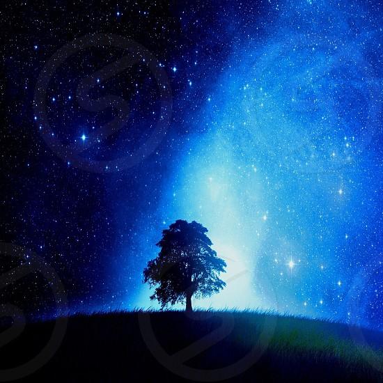 A Tree Shine In The Dark photo
