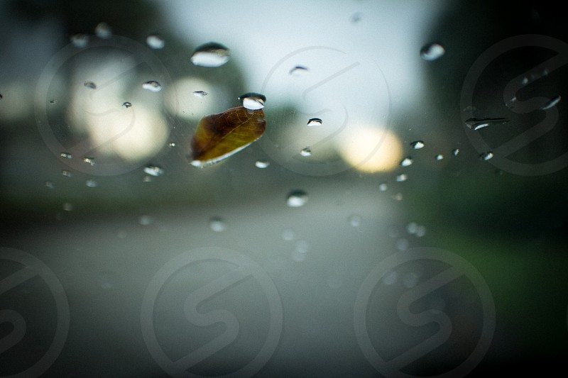 brown small leaf on glass photo