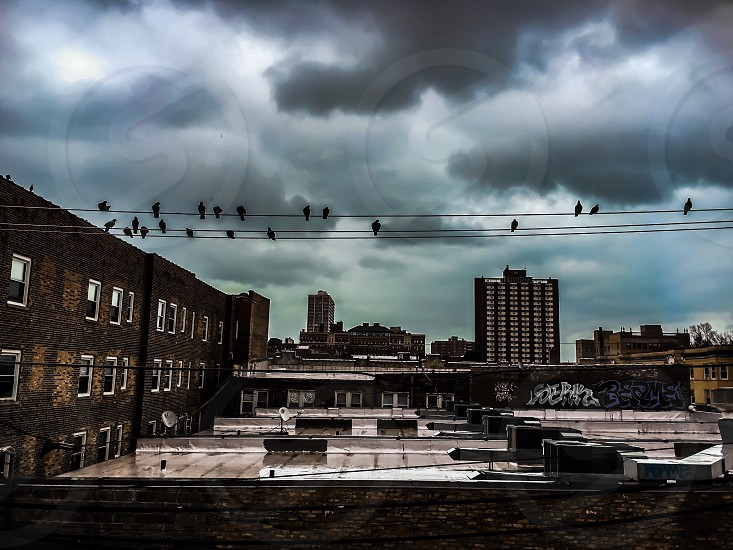 Chicago street birds storm clouds urban city roof top wire  photo
