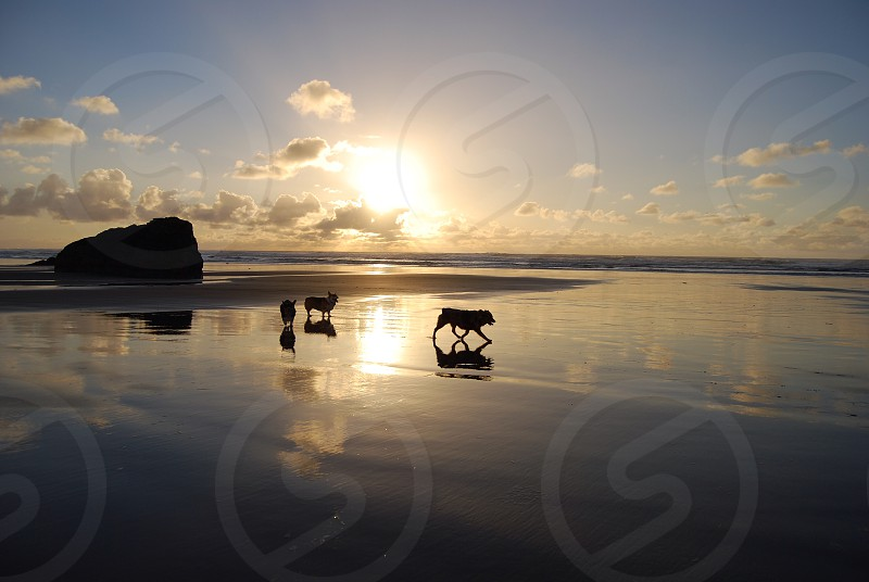 water and dogs with clouds photo
