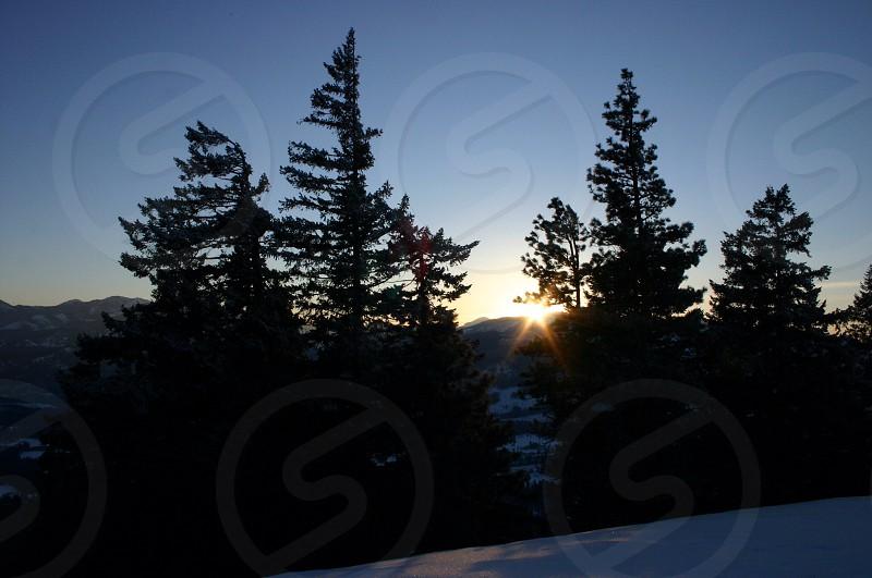 Sun trees snow mountaintop pine needles Douglas fir light star burst photo