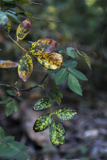 Macro photo of some vibrant yellow and green spotted leaves.  photo