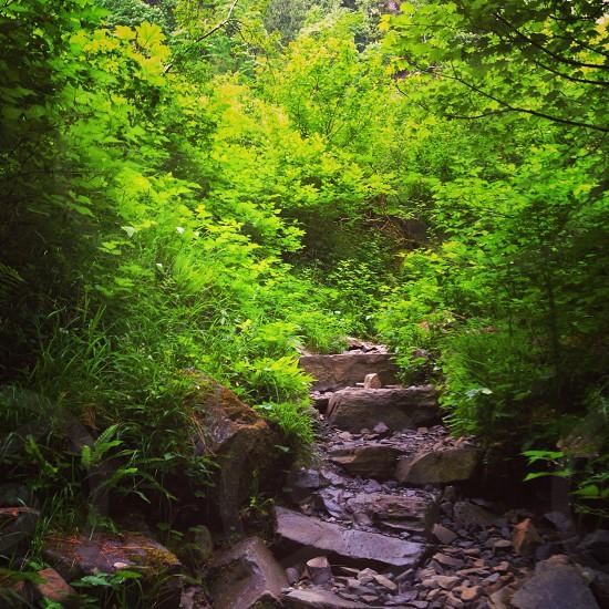 Hiking path Washington state area photo