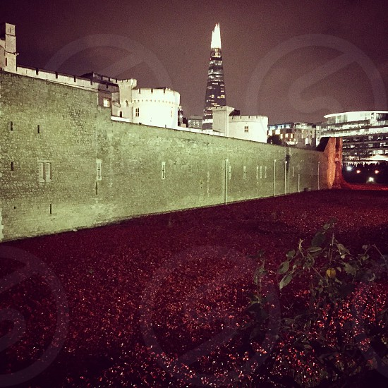 Tower of London with shard poppies  photo