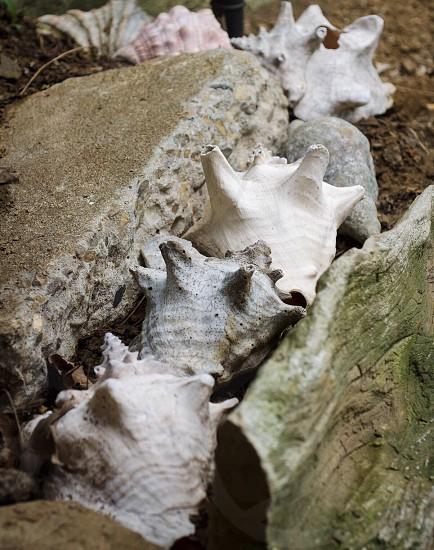 Shells garden photo
