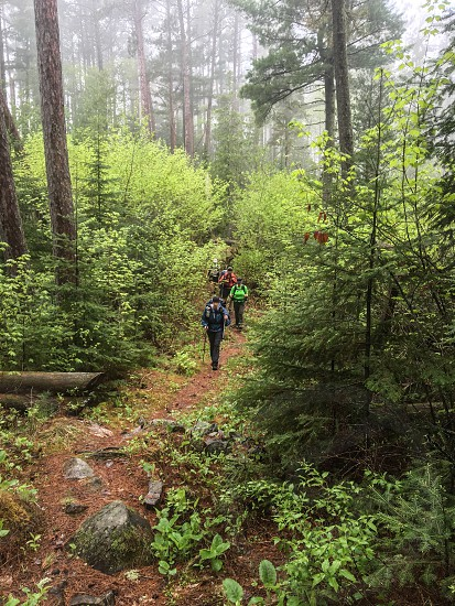 Hikers in misty forest photo