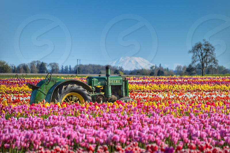 green tractor on flower field photograph photo