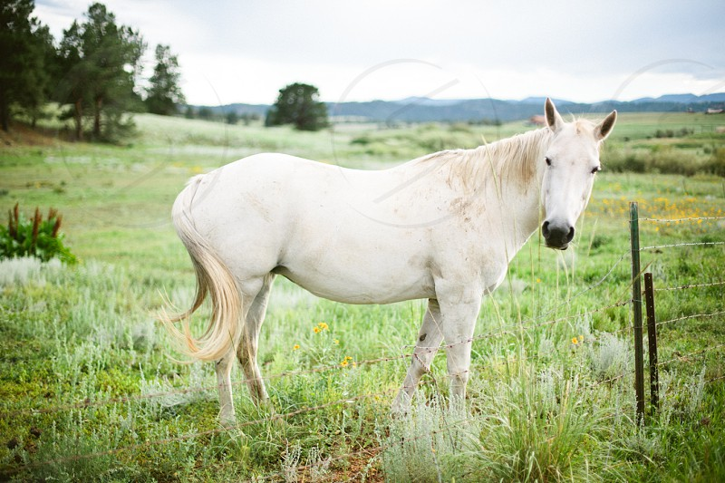 white horse and green tall grass photo