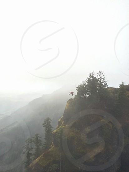 pine tress on the mountain  photo
