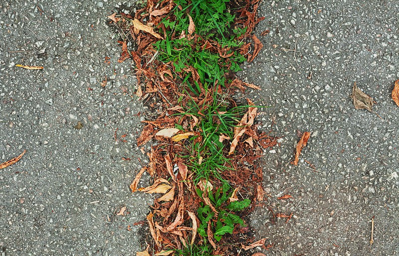 Texture of an old asphalt divided with fresh grass. photo