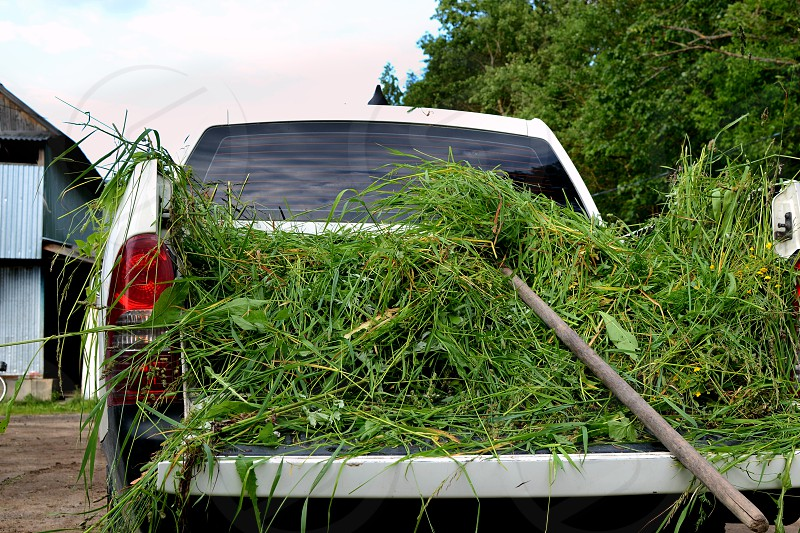 Truck loaded with fresh grass on a farm photo
