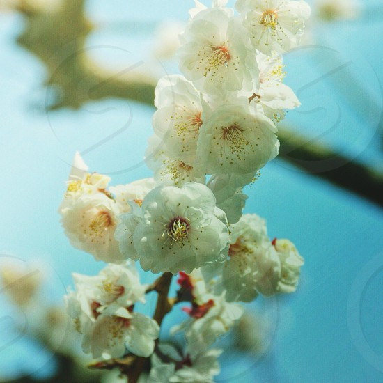 White flowering stalk photo