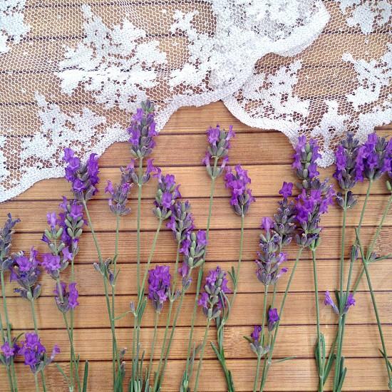 lavendar flowers  photo