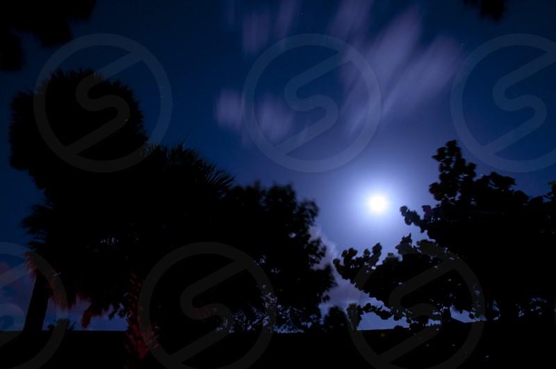 Full Moon Night dark silhouette silhouette shadow dark tree tree park Night Park Nature photo