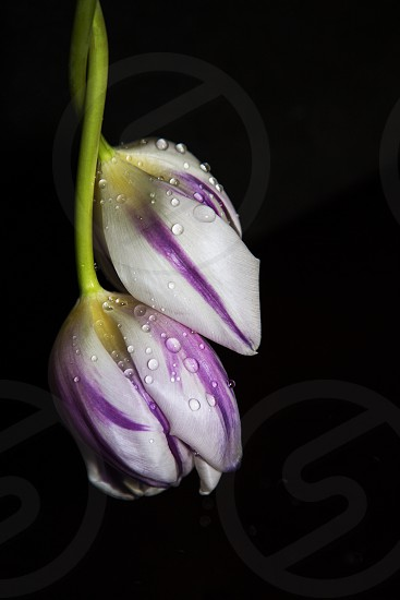 close up photography of white and purple cluster petaled flowers photo