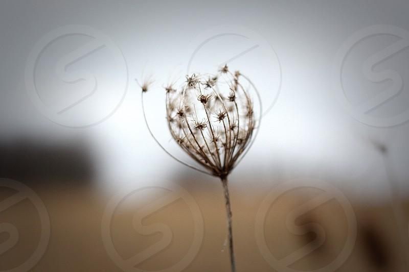 Lone wildflower. photo