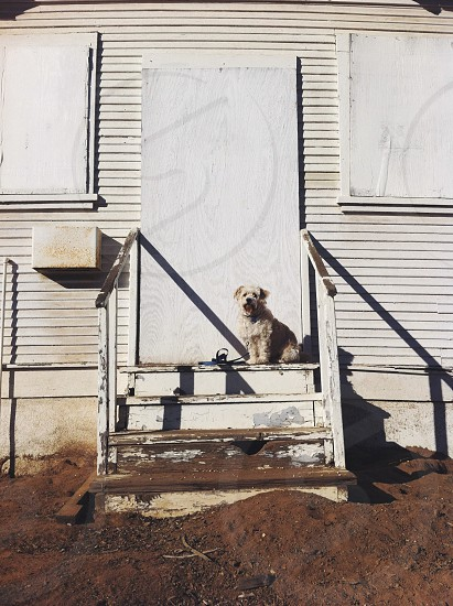 white dog on stairs photo