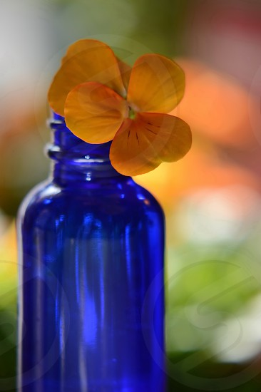 Tiny blue apothecary bottle with an orange pansy flower in it. photo