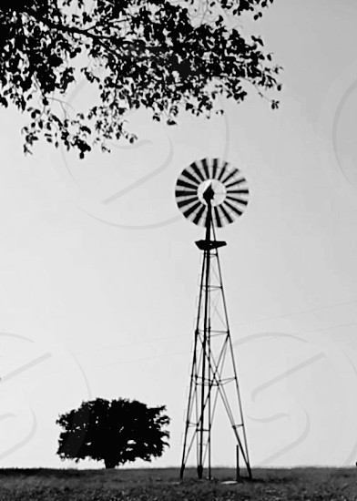 Texas Hill windmill Texas western Texas vintage countryside wind windmill under tree black & white photgraphy photo