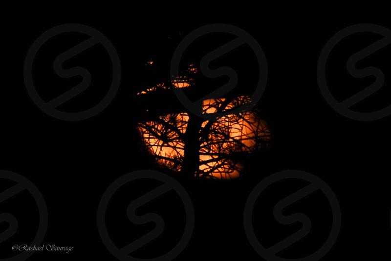 Moon Light  photo