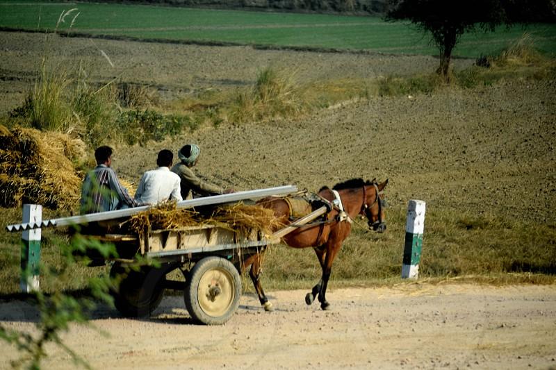 farm horse India photo