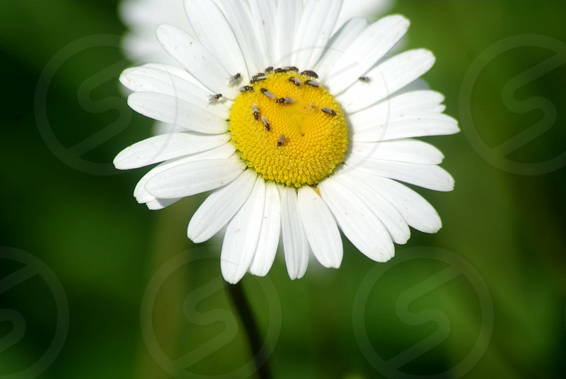 Flowers and insects on green background photo