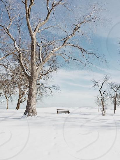 Winter on Lake Michigan photo
