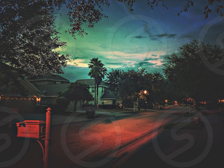 City Sunset trees photo