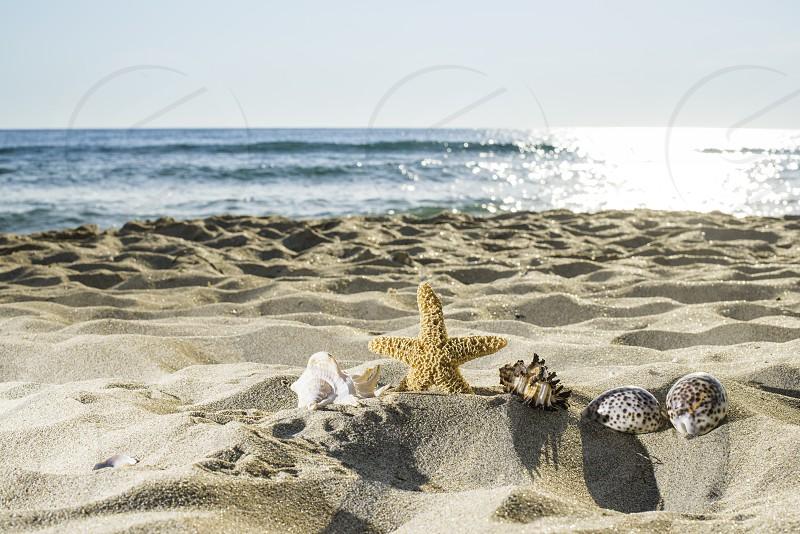Shells on the beach. Sun light. Blue sky photo