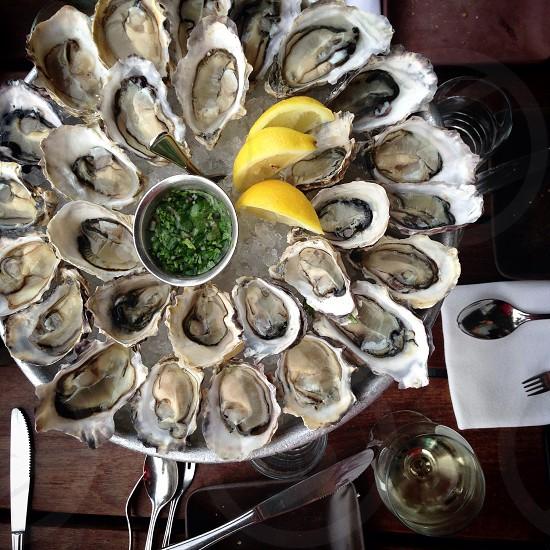 gray and white scallops photo