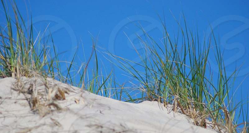 green grass field and brown sand photo