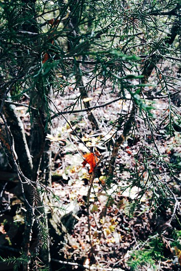 Fall leaves forest nature photo