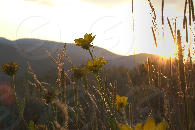 Wildflowers at dusk. photo