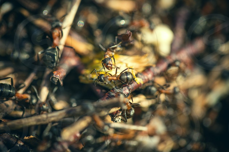 macro ants forest autumn europe photo