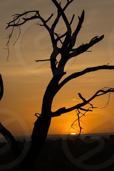 Sunrise in Tanzania during February 2014 photo safari. photo