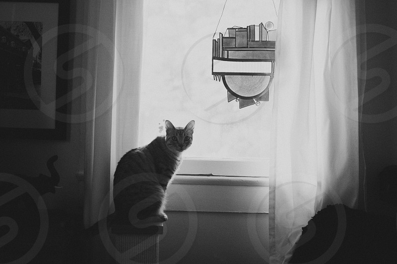 Cat stained glass window black and white photo