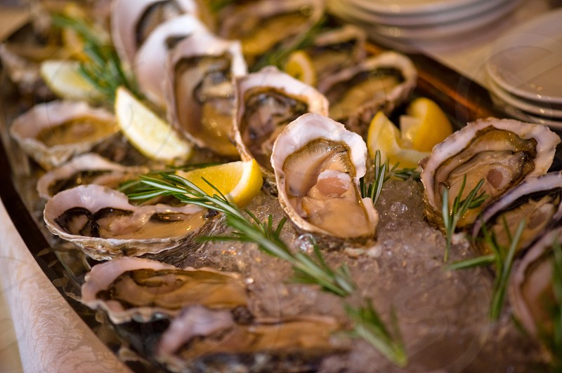 oyster on ice on serving tray photo