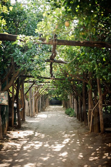 brown wooden archway with trees photo