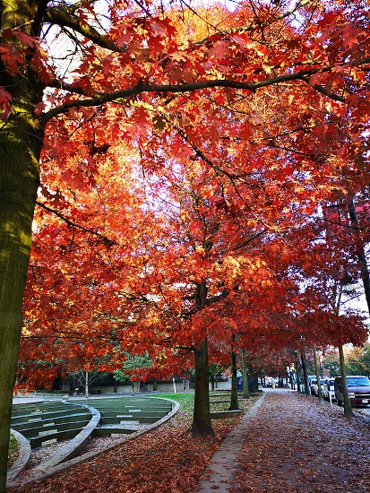 Autumns red and yellow leaves in the city photo