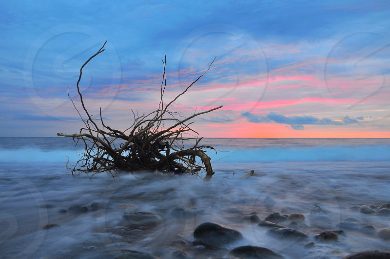 dried tree branches on water photo