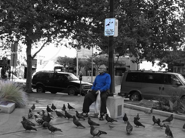 Don't feed the birds! photo
