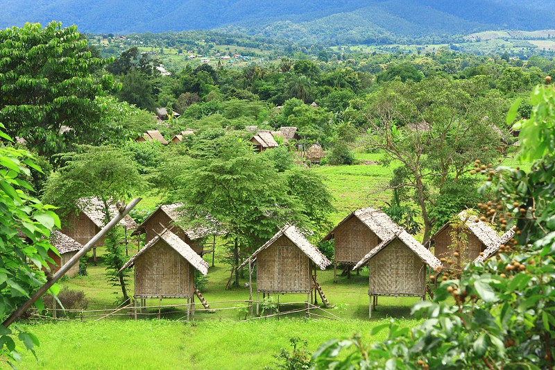Lovely view of the green palm trees bungalows - Himalayan Resort Thailand Pai photo