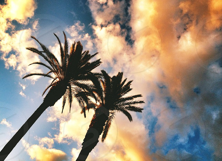 palm trees under clouds photo